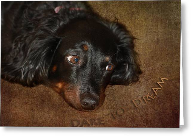 Black And Tan Dachshund Greeting Cards - Dare To Dream Greeting Card by Terry Fleckney