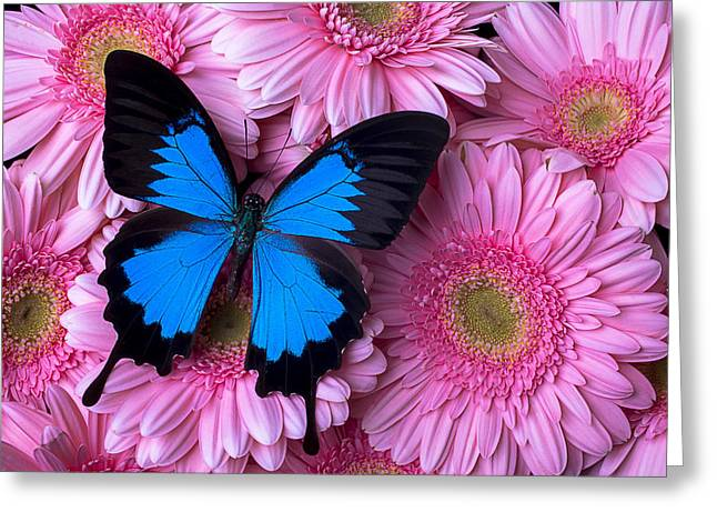 Dark Blue Greeting Cards - Dark Blue Butterfly Greeting Card by Garry Gay