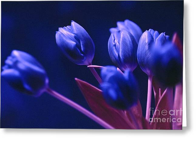 Emotions Pyrography Greeting Cards - Dark Blue Tulips Greeting Card by Silva Wischeropp