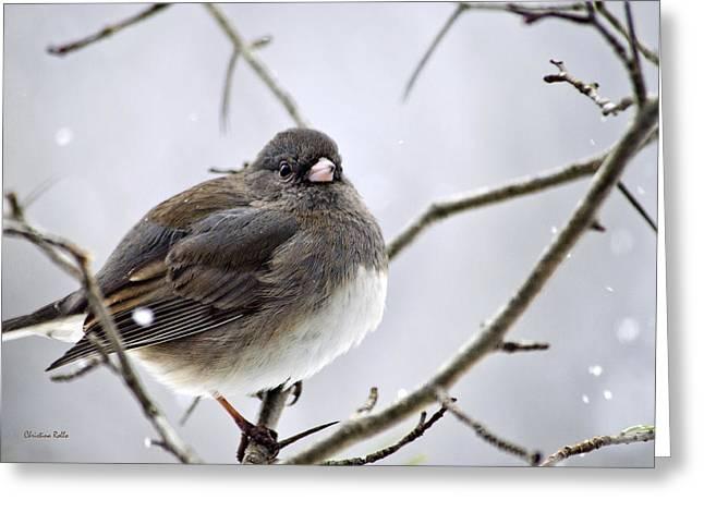 Bird Species Greeting Cards - Dark-Eyed Junco Greeting Card by Christina Rollo