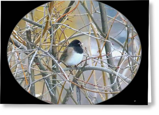 Dark- Eyed Junco Greeting Card by Will Borden