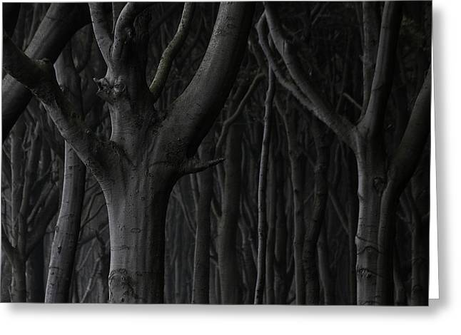 Dark Forest Greeting Card by Heiko Koehrer-Wagner