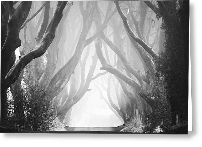 Beautiful Scenery Greeting Cards - Dark Hedges III Greeting Card by Pawel Klarecki