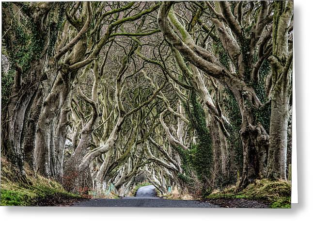 Ballymoney Greeting Cards - Dark Hedges  Greeting Card by Nigel R Bell