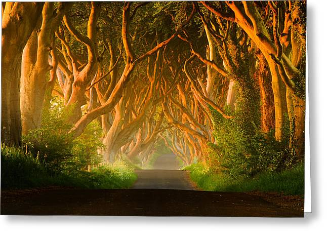 Ballymoney Greeting Cards - Dark Hedges - Northern Ireland Greeting Card by Przemyslaw Zdrojewski