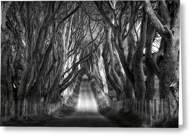 Ballymoney Greeting Cards - Dark Hedges Ireland Greeting Card by Tom Odaniell