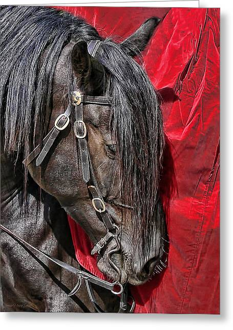 Protrait Greeting Cards - Dark Horse against Red Dress Greeting Card by Jennie Marie Schell