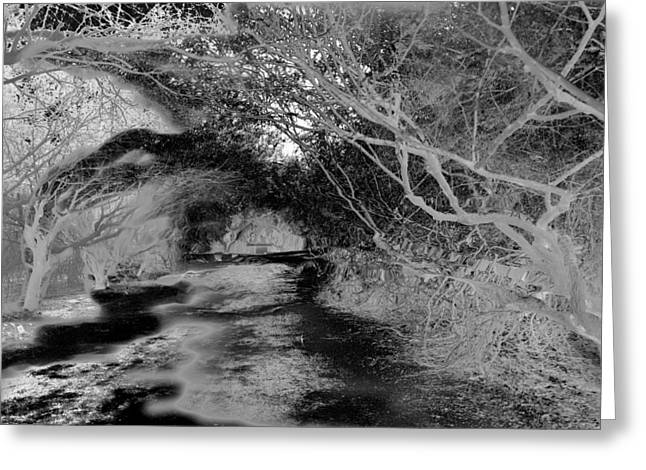 Tree Leaf On Water Greeting Cards - Dark magical forest Greeting Card by Roxana Casillas
