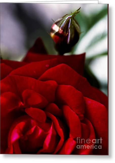 Dark Passion Greeting Card by Jan Bickerton