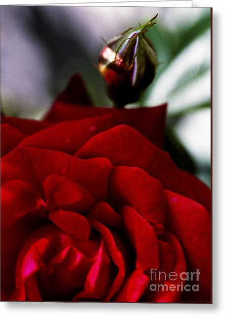 Valentines Day Greeting Cards - Dark Passion Greeting Card by Jan Bickerton