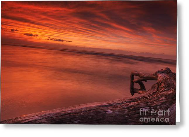 Dry Lake Greeting Cards - Dark red dramatic sunset scenery over lake Huron Greeting Card by Oleksiy Maksymenko