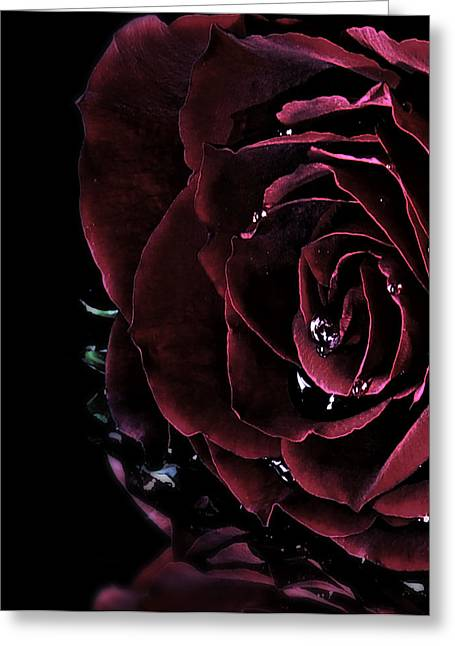 Photographs With Red. Greeting Cards - Dark rose 2 Greeting Card by Ann-Charlotte Fjaerevik