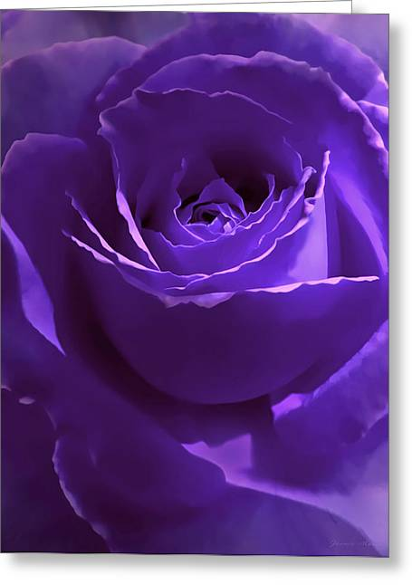 Rose Portrait Greeting Cards - Dark Secrets Purple Rose Greeting Card by Jennie Marie Schell