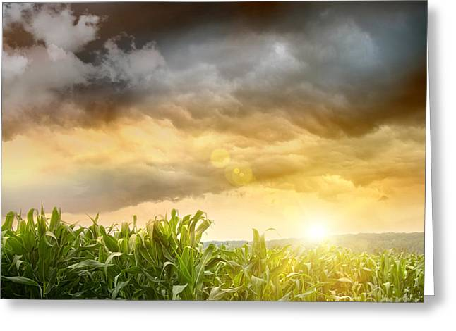 Peasant Greeting Cards - Dark skies looming over corn fields  Greeting Card by Sandra Cunningham