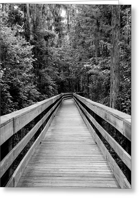 Polk County Florida Greeting Cards - Dark Stroll Greeting Card by Laurie Perry