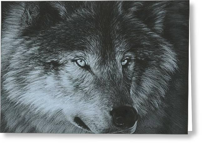 Wolves Drawings Greeting Cards - Dark Wolf Greeting Card by Carla Kurt