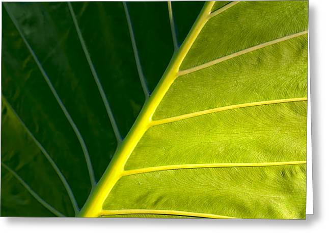 Elephant Ear Plant Greeting Cards - Darkness And Light - Elephant Ear Leaf Details Greeting Card by Mark Tisdale