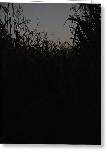 Corn Maze Greeting Cards - Darkness Settles At The Corn Maze Greeting Card by April Hendricks