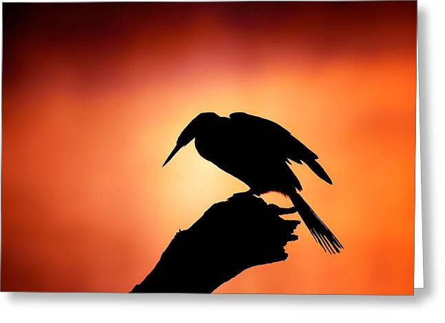 Backlit Greeting Cards - Darter silhouette with misty sunrise Greeting Card by Johan Swanepoel