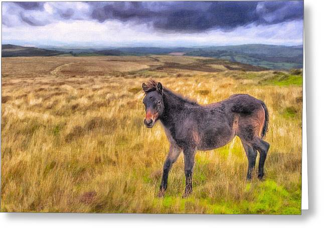 Britain Greeting Cards - Dartmoor Pony On The Moors Greeting Card by Mark Tisdale