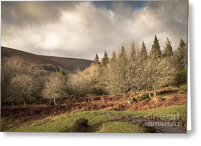 Dartmoor View Greeting Card by Jan Bickerton