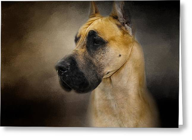 Artistic Photography Greeting Cards - Dashing Great Dane Greeting Card by Jai Johnson
