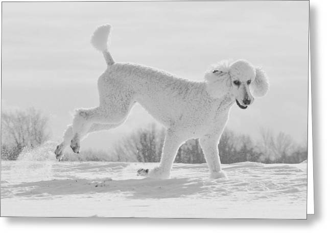 Dog In Snow Greeting Cards - Dashing Through The Snow Greeting Card by Lisa  DiFruscio