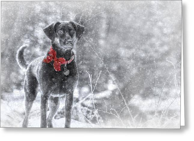 Chocolate Lab Greeting Cards - Dashing Through the Snow Greeting Card by Lori Deiter