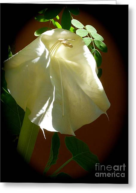 Datura Aging Gracefully Greeting Card by L T Sparrow