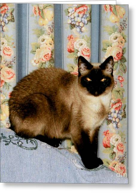 Siamese Cat Print Greeting Cards - Daughters Cat Christy Greeting Card by Ruth  Housley