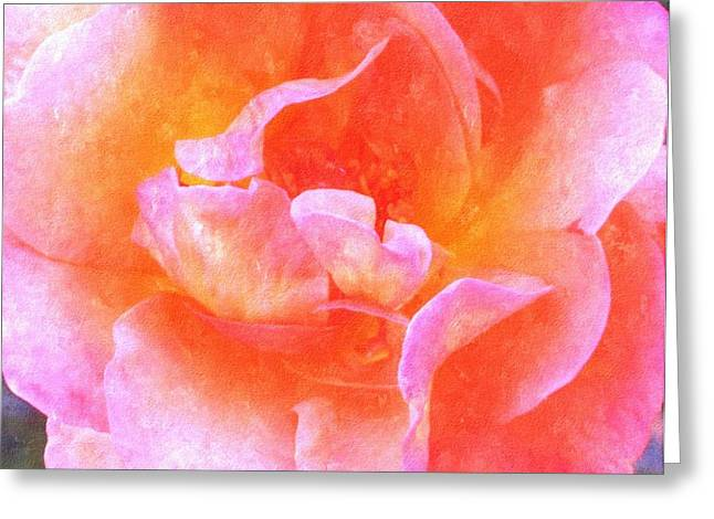 Entryway Drawings Greeting Cards - David Austins  Old World Rose Greeting Card by Rosemarie E Seppala