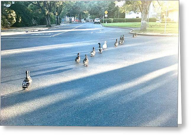 Uc Davis Photographs Greeting Cards - Davis Ducks Greeting Card by Cadence Spalding