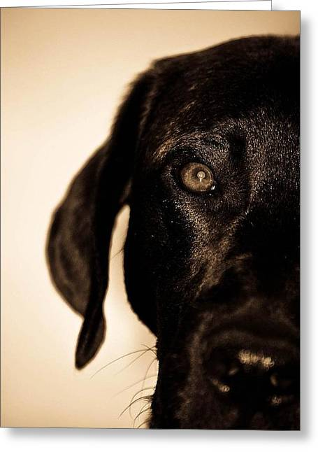 Setter Pointer Greeting Cards - Dawg Greeting Card by Jamie Bishop