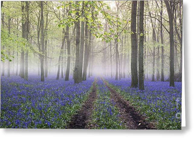 Mystical Landscape Greeting Cards - Dawn Bluebell Wood Panoramic Greeting Card by Tim Gainey
