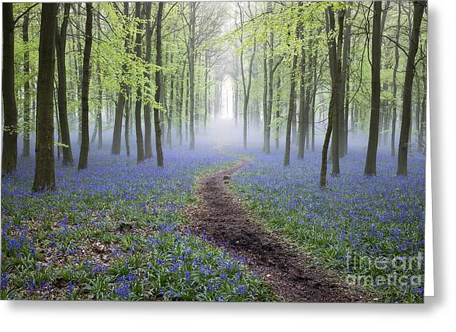 Mystical Landscape Greeting Cards - Dawn Bluebell Wood Greeting Card by Tim Gainey