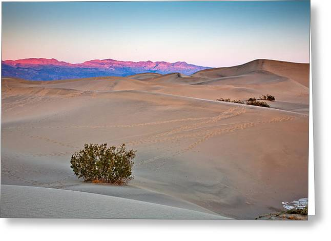 Dawn Dunes Greeting Card by Peter Tellone