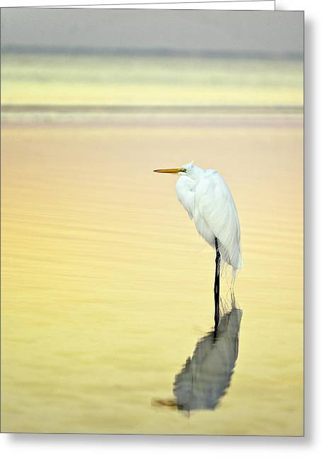 Florida House Greeting Cards - Dawn Egret Reflection Greeting Card by Vicki Jauron