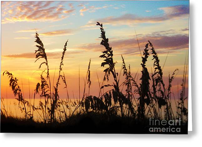 St. Lucie County Greeting Cards - Dawn Greeting Card by Megan Dirsa-DuBois