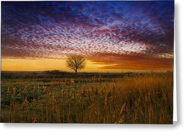 Pink Black Tree Rainbow Photographs Greeting Cards - Dawn over the Marshes Greeting Card by Adrian Campfield