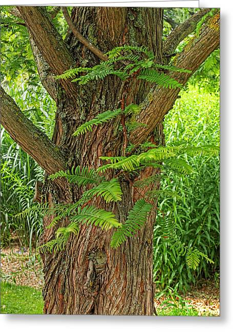 Dawn Redwood - Metasequoia Greeting Card by Gill Billington