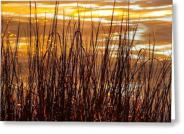 Dawn's Early Light Greeting Card by Karen Wiles