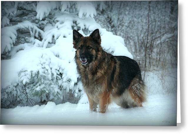 Dog In Snow Greeting Cards - Dawns First Light Greeting Card by Sue Long