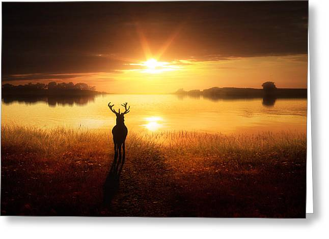 Calm Water Reflection Greeting Cards - Dawns Golden Light Greeting Card by Jennifer Woodward