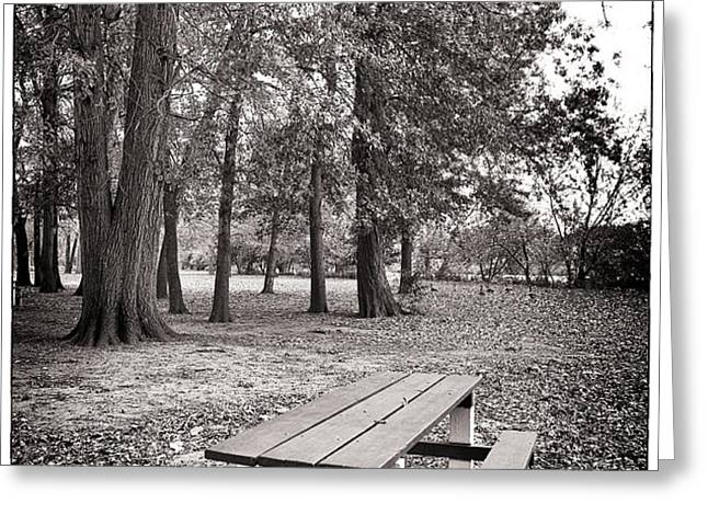 Day at the Park Greeting Card by John Rizzuto
