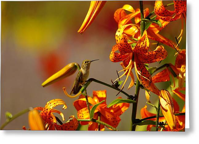Day Dreaming In The Blooms Greeting Card by Jeff Swan