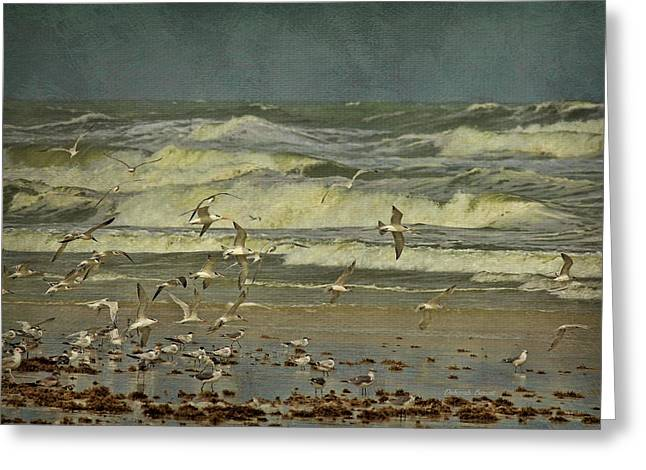 Tern Photographs Greeting Cards - Day For The Birds Greeting Card by Deborah Benoit