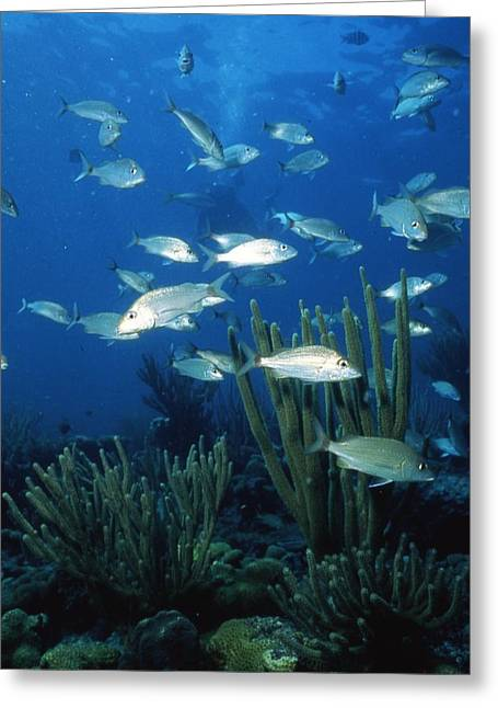 School Of Fish Greeting Cards - Day in the Ocean Greeting Card by Retro Images Archive