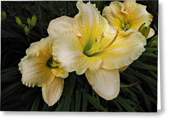 Day Lily Greeting Cards - Day lilies a short life Greeting Card by David Dehner