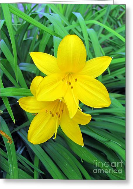 Day Lilly Greeting Cards - Day Lilies Greeting Card by Elizabeth Dow