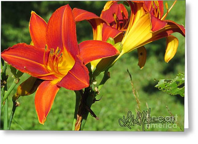 Llmartin Greeting Cards - Day Lily 3 Greeting Card by Linda L Martin